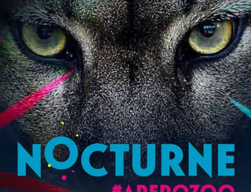 Nocturne – Zoo de Vincennes