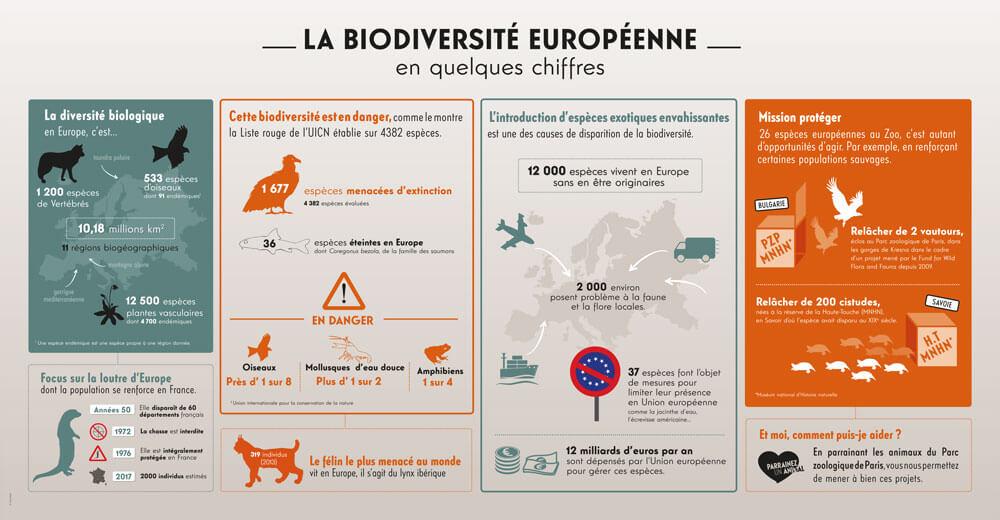 Réalisation d'infographie pour zoo de vincennes
